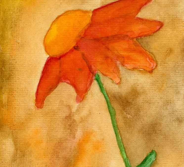 Orange daisy  (#186)