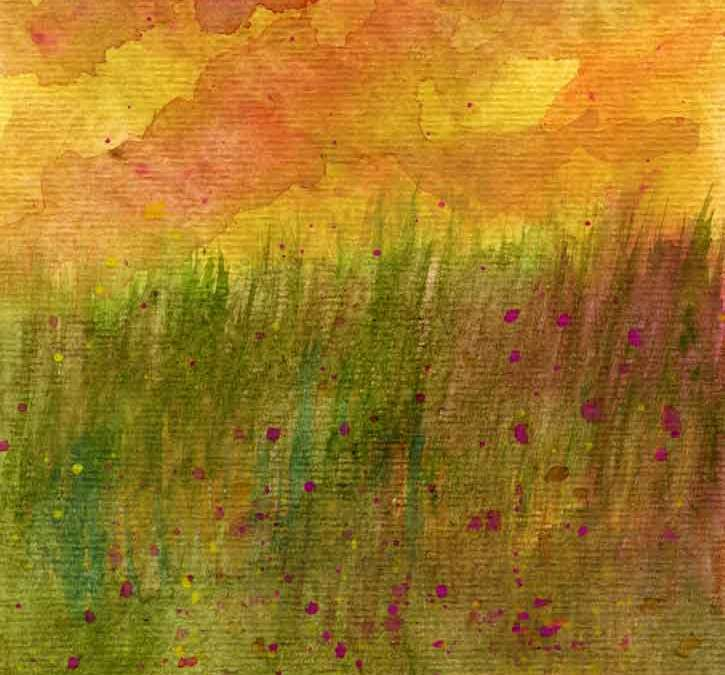 Sunset field landscape (#332)