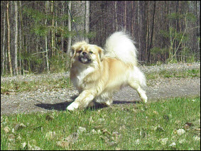 aki.moves