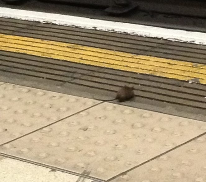 A small mouse on a tube platform