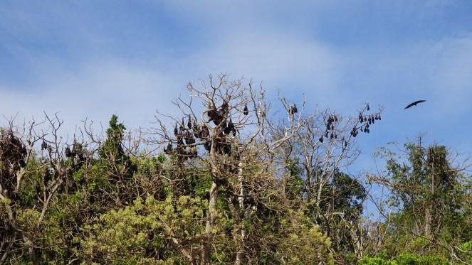 Club Paradise Palawan - Fruit Bats
