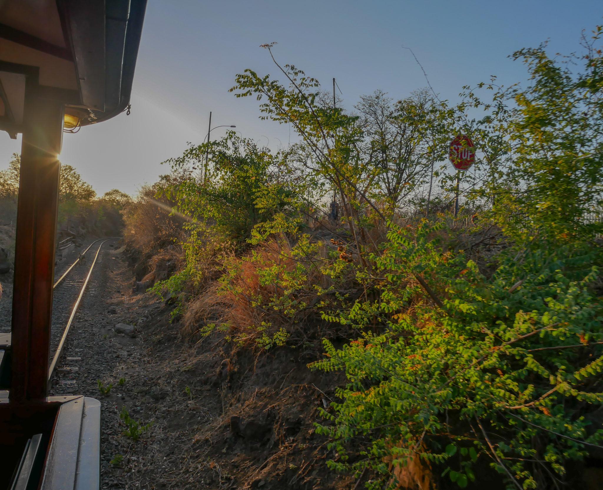The dry bush alongside the tracks of the Royal Livingstone Express train