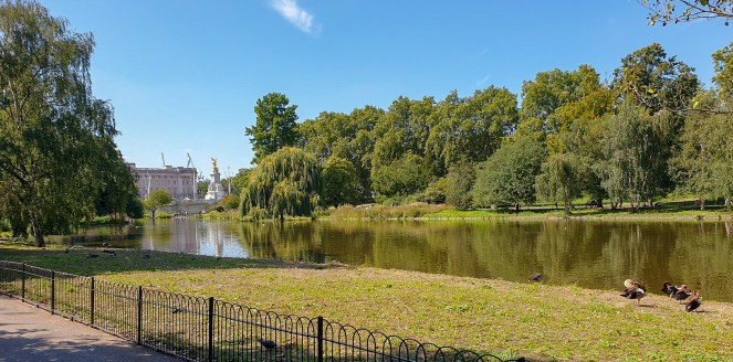 St James's Park lake with Buckingham Palace in the background