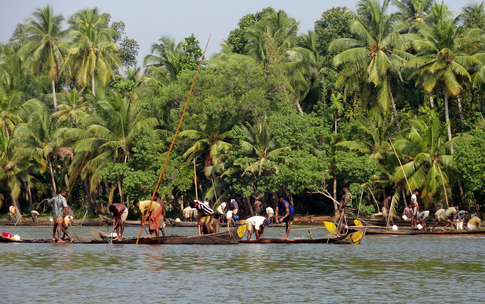Indian men fishing from wooden boats in the Kappil Backwaters, Kerala, India