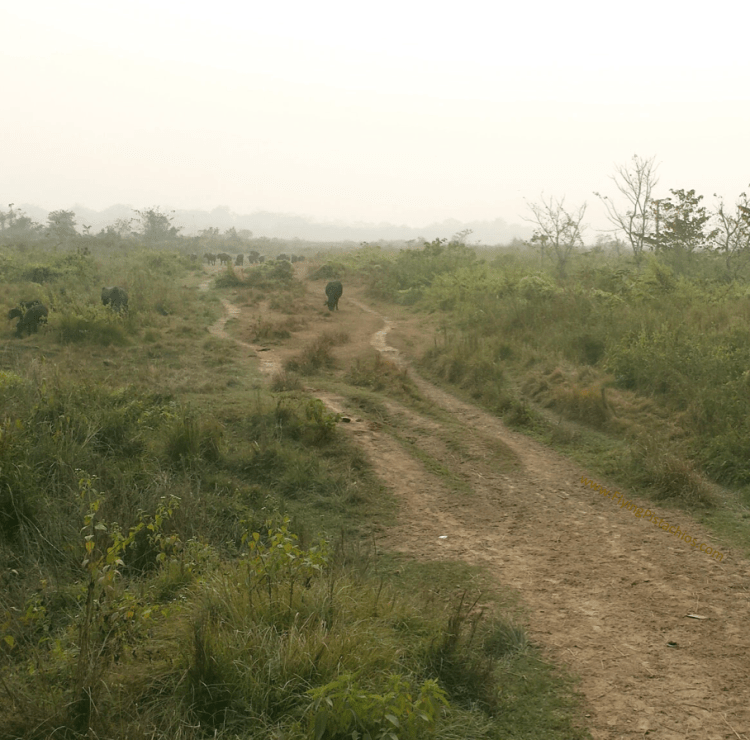 nepal holiday chitwan