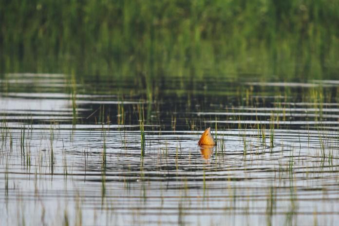 Charleston-SC-redfish-saltwater-flyfishing-photography-9.jpg