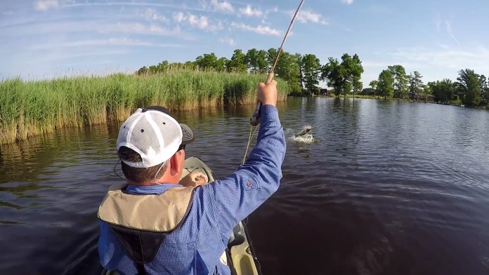 Fly Fishing for Smallmouth/Largemouth Bass: Your Complete Guide thumbnail