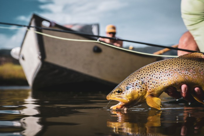 Salmon Fly Brown Trout