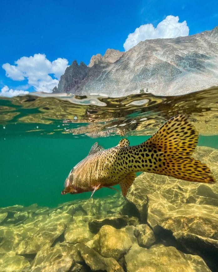 fish swimming off