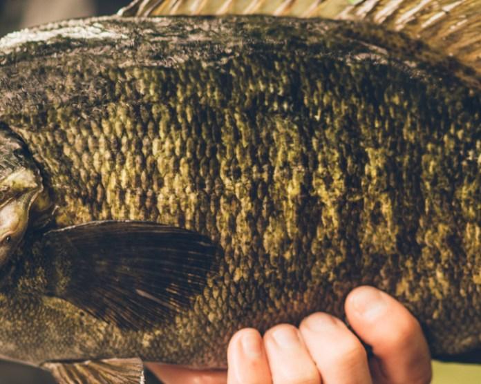 Fish Skin Quiz