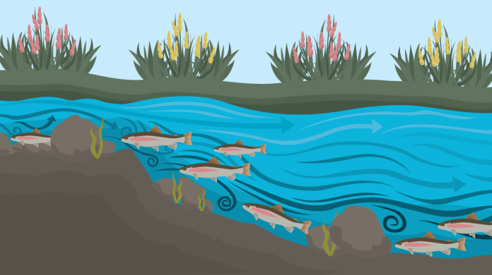 streamer fly diagram