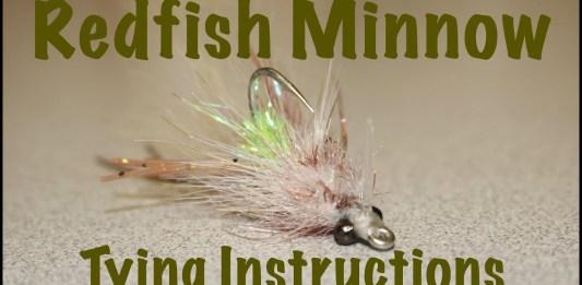 redfish minnow