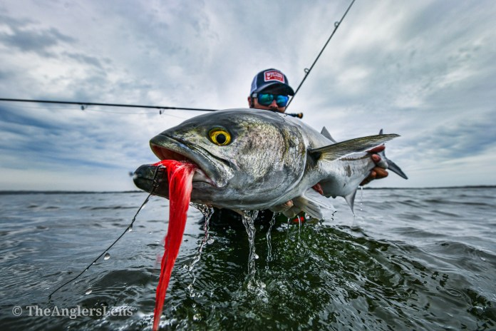 Bluefish on the fly