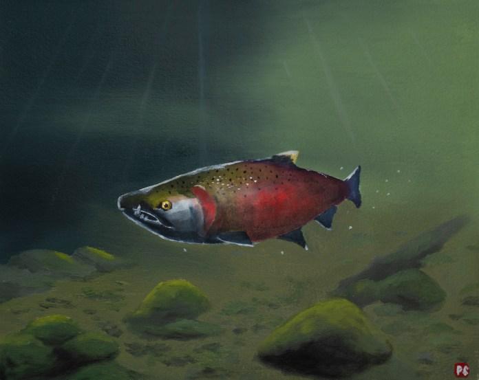 Pavel Francev Saber Toothed Salmon