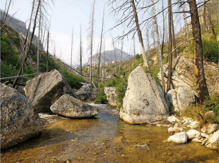 A canyon cutthroat stream in the Bighorns