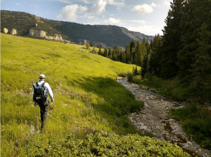 Hiking down a Bighorn stream in search of cutthroats