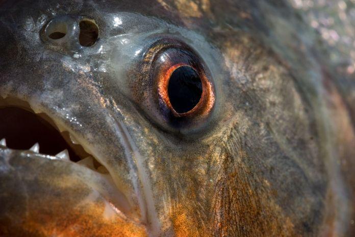 fish eye staring