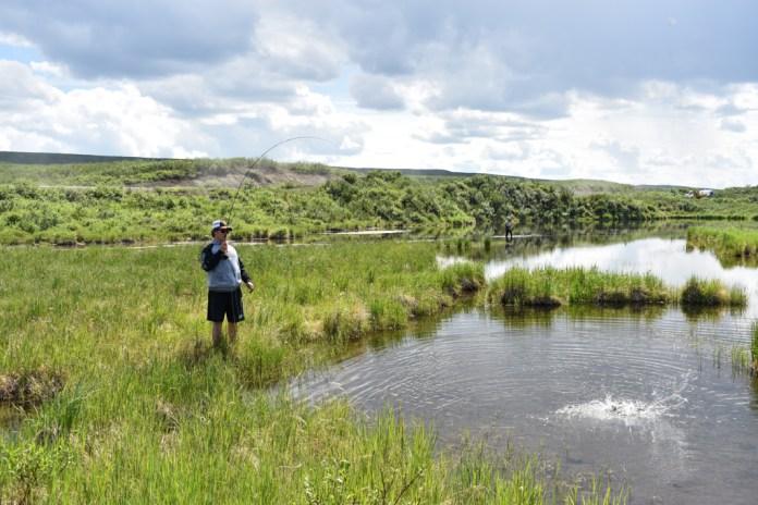 denali highway fishing alaska