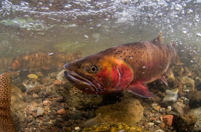 Spring Into Trout Love: What to Know About Upcoming Spawning Seasons