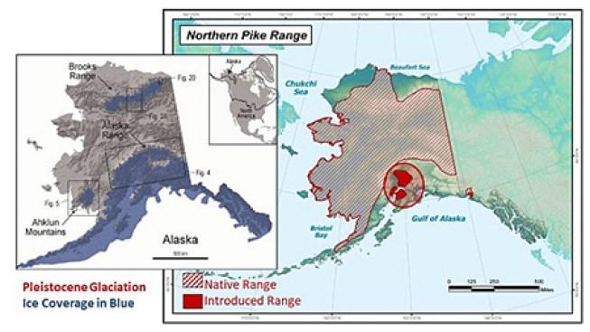 pike invasive native alaska