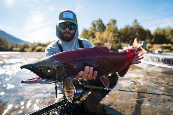 fly fishing for sockeye salmon