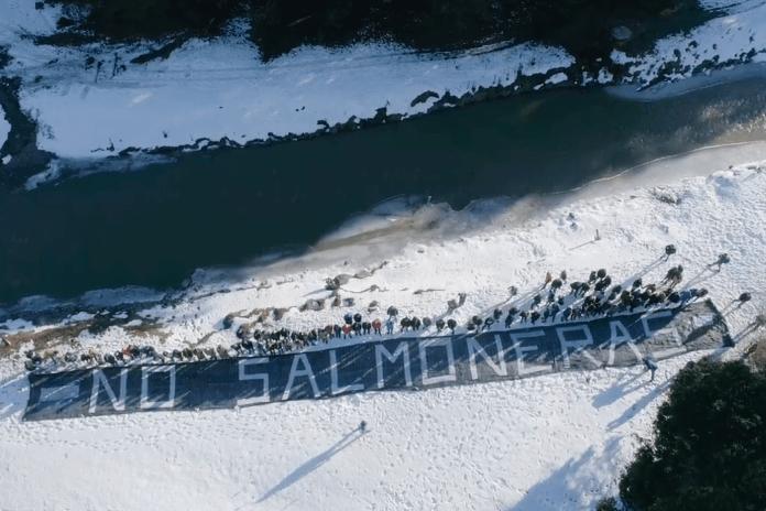 Argentina Salmon Farming Ban