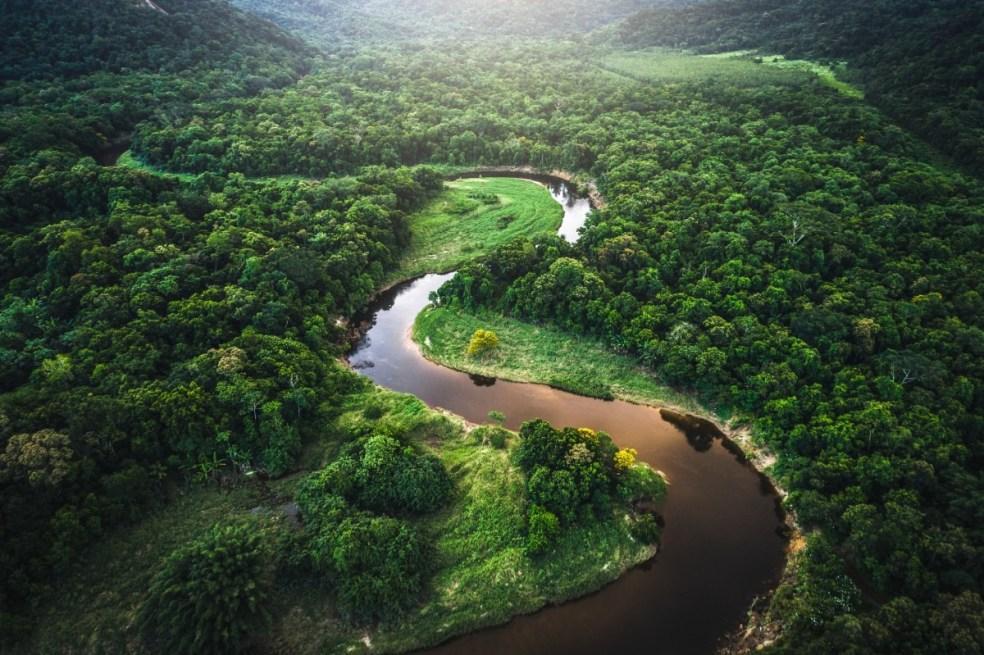 Floresta desconhecida com rio no meio