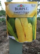 Sweet Corn - Early Sunglow