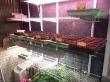 Pepper, Tomatoes Plants
