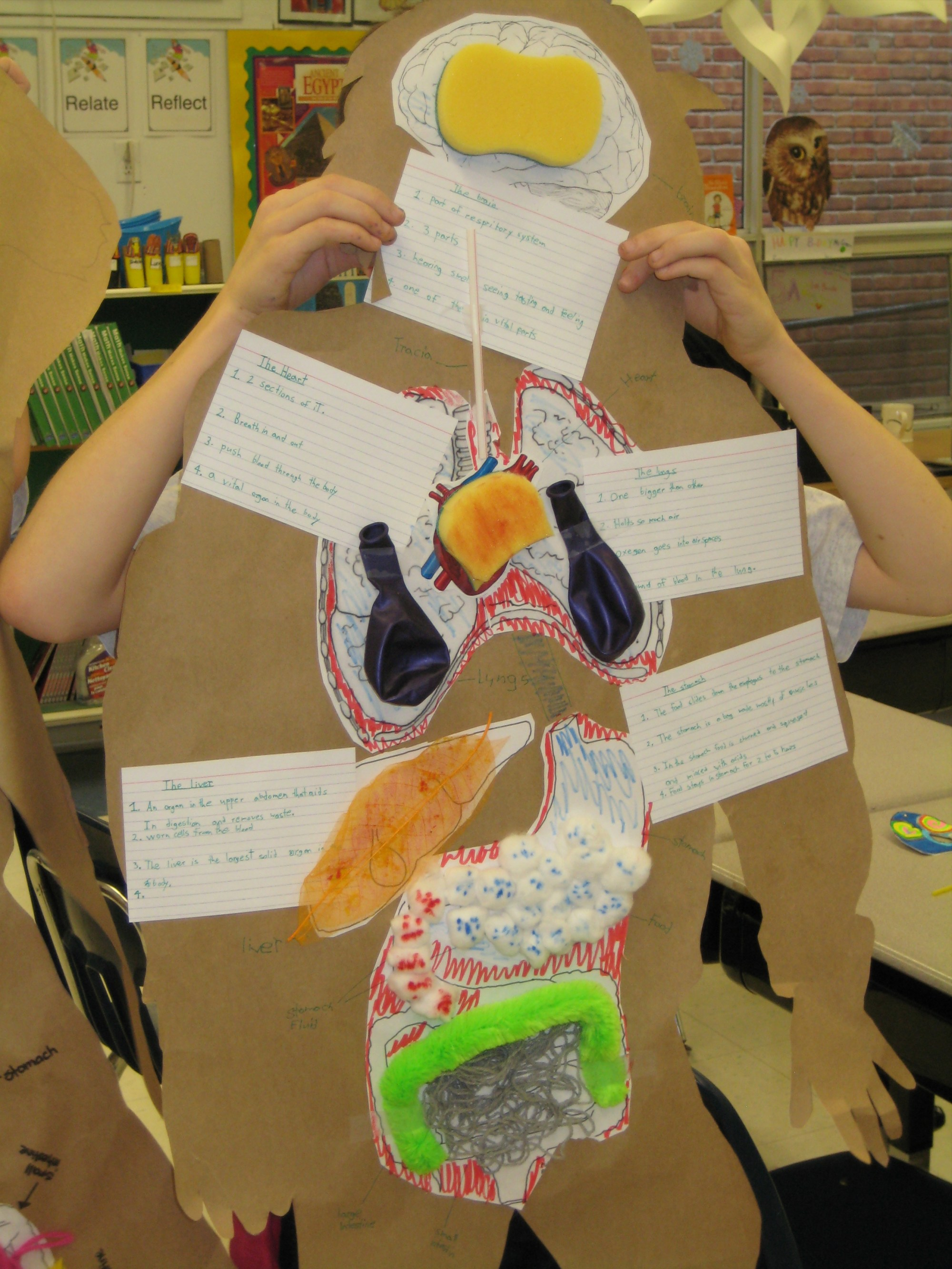 hight resolution of Science: The Human Body – Grade 5 – Final Assessments   A Fly on the  Classroom Wall