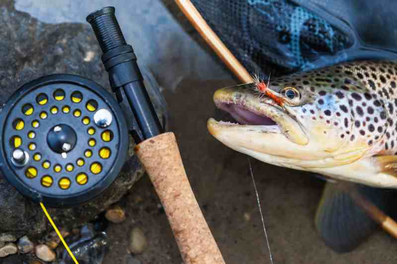 Buying Guide The Fly Rod Combo and Other Great Gift Ideas
