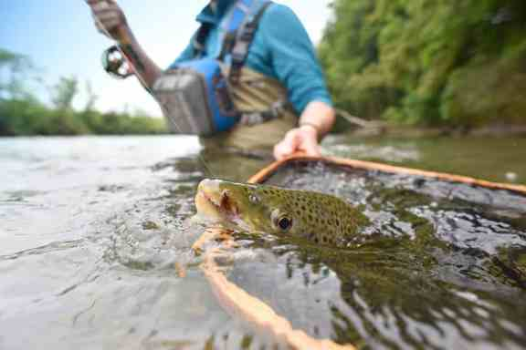 Fly fishing leader vs tippet