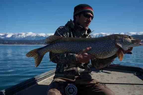 northern pike fly fishing