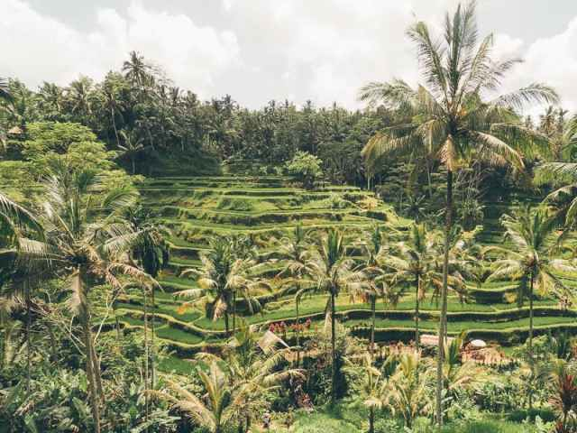 Tegalalang Rice Terraces is a must visit place to visit in Ubud Bali. This complete guide to visiting the Tegalalang Rice Terraces includes tips on how to get there, best time to visit and other things to know before you go.