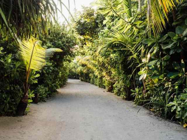 Tropical white-sand pathways at Finolhu Resort in the Maldives