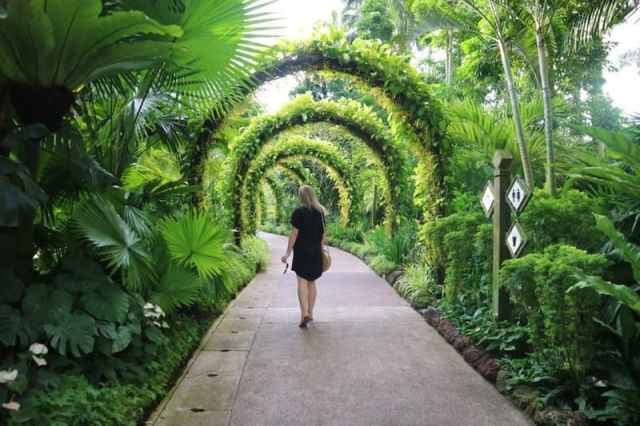Tropical plant covered archways at Singapore Botanical Gardens