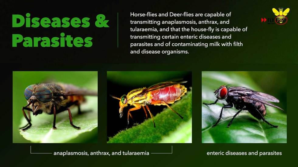 Diseases and Parasites FlyTrap.in