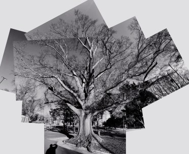 How to Photograph a Tree