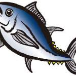 魚の語源。複数のお魚の名前と充てられた漢字の由来も紹介。