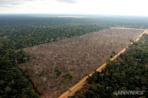 February 20th 2006.  Flight from Manaus to Santarem, Amazon, Brazil. A huge area of 1645 hectares (Gleba do Pacoval area 100km SE of Santarem) illegally logged to clear land for soya plantations.