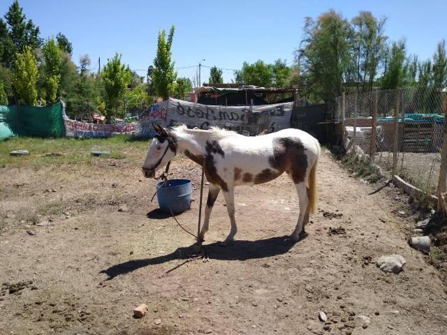 choreo para el hombre de un caballo y la yegua