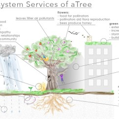 Green Roof Water Runoff Diagram 1998 Ford Expedition Wiring Servicing Those Ecosystems: The Value Of Trees - Fmlink