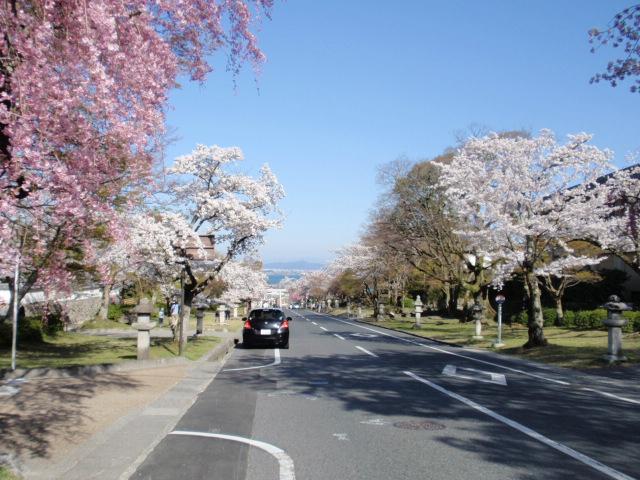 サクラの並木道から琵琶湖が一望できる参道