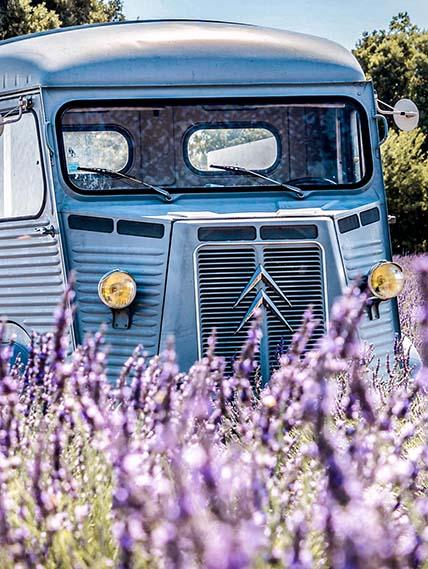 Plateau claparades Provence Champs Lavande