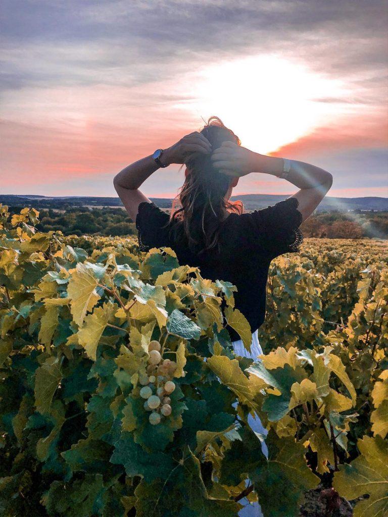 Vigne Pouilly Fume coucher de soleil