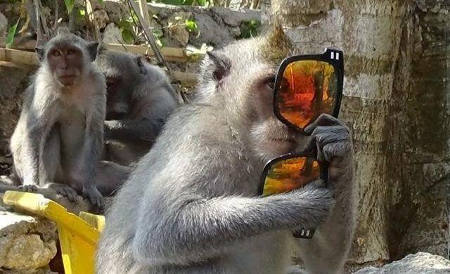 Trek Bali