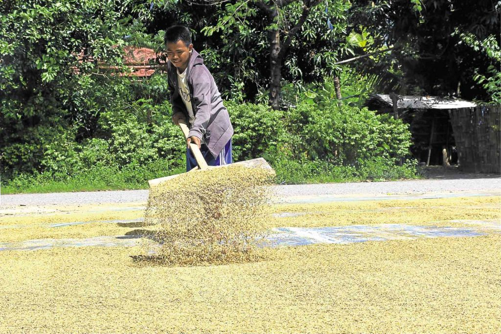 rice tariffication law cost farmers P68B worth of loss