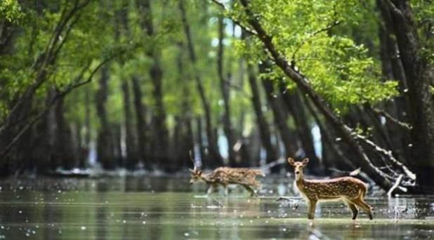 Nijhum Dwip Deer