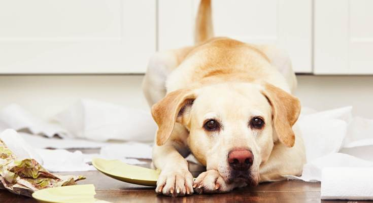9 Smart Pet Gadgets for Dog-Proof Your Home