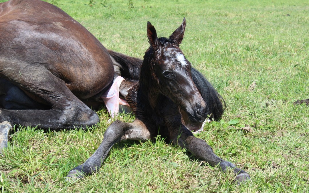 Five Signs Your Newborn Foal is Healthy